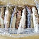 真いか (IQF スルメイカ) 業務用7.5kg(18〜35尾) 北海道・青森県産送料無料※サイズを選択してください。【沖縄県、一部離島は別途追加送料500円を加算させていただきます。】