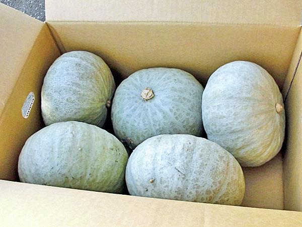 【送料無料】【10月上旬~12月中旬 なくなり次第終了】北海道産 雪化粧かぼちゃ10kg(4~6玉)×1箱【常温便】