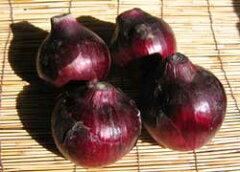 とっても珍しい&美味しい「紫玉ねぎ」大好評!9月上旬発送開始!北海道産紫玉ねぎ 5kg