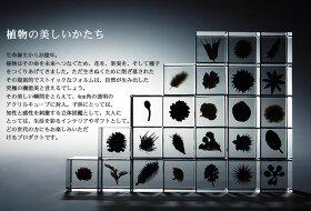 【送料無料】宙-sola-ソラsolacube標本箱木箱セット(9個入り)