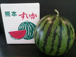 植木すいか2Lサイズ(1玉入7kg以上)熊本県植木産