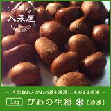 長崎産びわの生種1kg