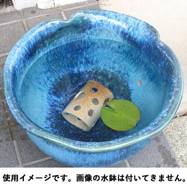 睡蓮鉢メダカ鉢めだかハウス横型茶ぼかし信楽焼めだか鉢水鉢金魚鉢陶器メダカ水槽アクアリウム彩り屋