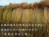 米七分づき恋の予感平成28年度産新鮮さにこだわりご注文後に精米農薬無散布化成肥料不使用完全天日干し米恋愛成就