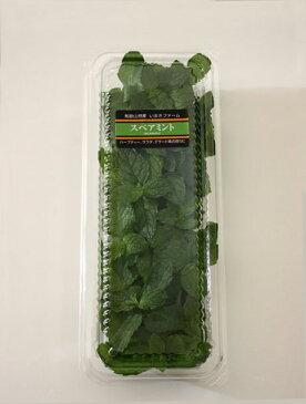スペアミント 15g モヒート用 フレッシュハーブ 和歌山県産 葉が大きく匂いが濃くモヒートに最適彩り屋