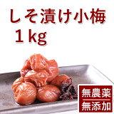 梅干し 無添加 無農薬 紀州 しそ漬小梅 1kg 熊野のご褒美 無化学肥料 梅干 ご自宅用にもお歳暮などのギフト 贈り物にもおすすめです。彩り屋