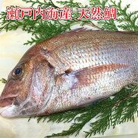 天然たいお刺身用瀬戸内海産天然鯛季節限定(約2kg、1匹)鮮魚/活〆/活魚/さしみ