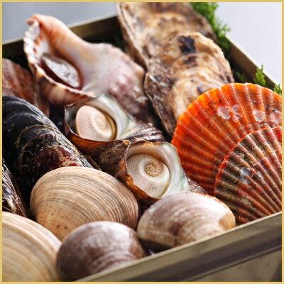 海の宝石箱【貝いろいろ】