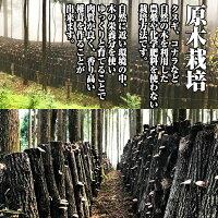 干し椎茸九州産肉厚200g原木栽培(国産干ししいたけ干しシイタケ乾燥しいたけ)