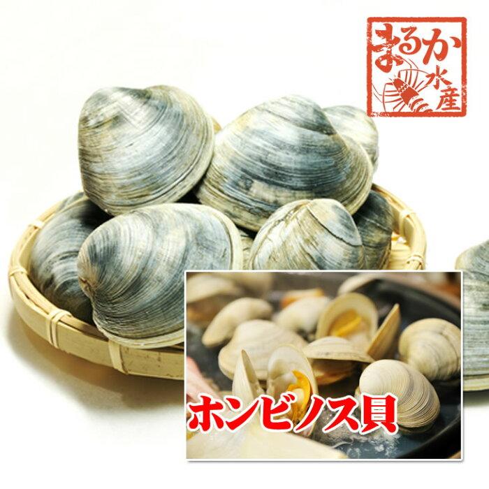 活ホンビノス貝中サイズ10個入り約1kg[貝類]