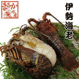 伊勢海老 冷凍(加熱用) 中大(230〜270g)  [魚介類] (活〆冷凍)