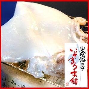 天然海水塩仕上げの白イカ!肉厚でイカのうま味たっぷり♪甘みの強いその身は食べ応え十分です...
