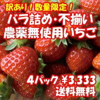 【送料無料】安心・安全な三芳村の訳あり農薬無使用いちごです。※大きさ不揃い、不恰好ないち...