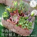 【送料無料】多肉植物 寄せ植え Old stone wall L(古い石垣L)【多肉植物 サイズイメージ:高さ約21cm×幅約23cm×奥行約13cm /1個売り】多肉植物 寄せ