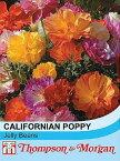 【輸入種子】Thompson & Morgan Californian Poppy jelly Beans カリフォルニアポピー(エスコルシア) ジェリー・ビーンズ トンプソン&モーガン