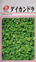 【種子】ダイカンドラ福花園種苗のタネ