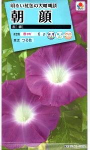 【種子】朝顔赤峰タキイのタネ
