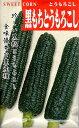 【種子】とうもろこし 黒もちとうもろこし日本タネセンター