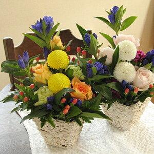 ≪送料無料!≫秋色の贈りものピンポンマムとリンドウのアレンジメント(花かご)