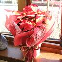 ≪送料無料!≫お歳暮やクリスマスプレゼントに、ぜひ♪ポインセチアの鉢花ギフト(花色:アイ...