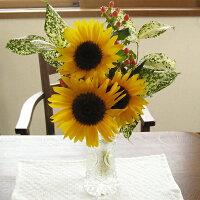 ヒマワリフラワーギフト父の日お見舞いお誕生日フラワー花花束向日葵ギフトプレゼント≪送料無料!≫かわいいヒマワリのミニブーケ♪