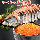 いくら+時鮭一本物姿切り 約2.3kg 送料無料 化粧箱入