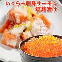 いくら アラスカ産+サーモン塩麹漬け 送料無料 化粧箱入 イクラ醤油漬け サーモン塩辛