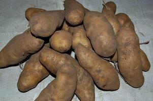 野菜・きのこ, ジャガイモ 20kgSSSSSRCP