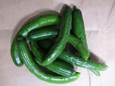 野菜・きのこ, キュウリ B2kg12206779RCP