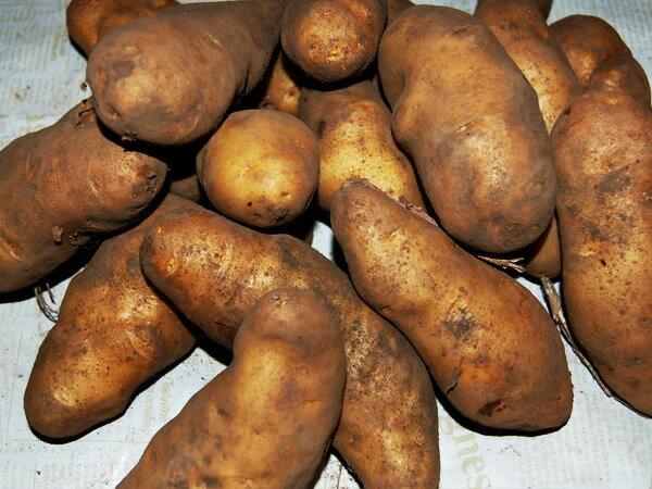 野菜・きのこ, ジャガイモ 10kg210kg24RCP