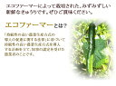 ★予約商品【訳ありきゅうり5kg】送料無料【岩手県二戸市産・...