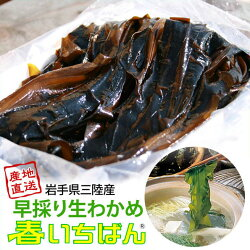 岩手県三陸産早採り生わかめ(しゃぶしゃぶワカメ)