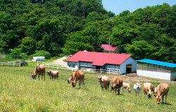 岩手県奥中山高原おさんぽジャージー三谷牧場の通販、金のヨーグルト