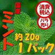 【税込 バラ売り】長野県産他 スペアミント 約20g 1パック(みんと ハーブ はーぶ すぺあみんと)上越フルーツ