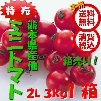 特売【送料無料 箱売 消費税込】熊本県産他 ミニトマト 2L~M 3kgバラ 1箱(業務用 みにとまと ミニ みに とまと)上越フルーツ