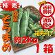 特売【送料無料 箱売 消費税込】新潟県産他 そらまめ L約2kg(サヤ付、1サヤ3粒前後)…