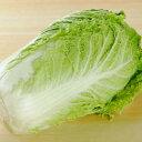 クール便送料無料【九州産】【信州産】箱売り 白菜 1箱(15kg)