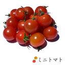 ミニトマト 1kg バラ売り 茨城県産他 | 業務用 ミニトマト プチトマト トマト とまと 熊本 お取り寄せ 新鮮野菜 野菜 新鮮野菜 上越フルーツ
