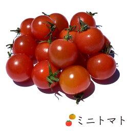 ミニトマト 1kg バラ売り 熊本県産他 | 業務用 ミニトマト プチトマト トマト とまと 熊本 お取り寄せ 新鮮野菜 野菜 新鮮野菜 上越フルーツ