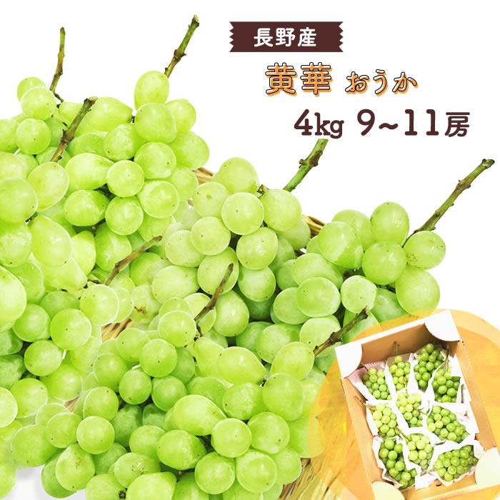 フルーツ・果物, ブドウ  () 911 4kg 4