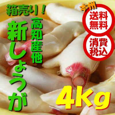 【本州送料無料 税込】高知県産他 新生姜 4kg(しんしょうが シンショウガ しょうが 生姜)上越フルーツ