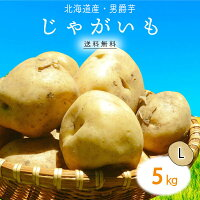2000円ポッキリ!【送料無料】北海道産じゃがいもL5kg1箱|じゃが芋ジャガイモポテト箱まとめ買い野菜根菜業務用上越フルーツ