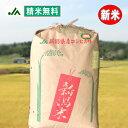 コジマフーズ  玄米いも粥 <200g>×20袋セット