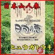 日本山人参(ヒュウガトウキ)お茶【送料無料】 日向の恵 飲みやすいお茶に! 健康茶 ドリンク 雑誌掲載 02P03Dec16