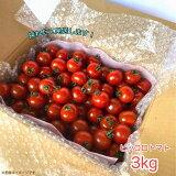 ミニトマト 3kg ピッコロトマト お取り寄せ クール便 送料無料 愛知県産ミニトマト 生産者より産地直送野菜! 美味しいミニトマト プチトマト トマトリコピン