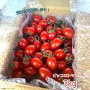 【スーパーセール特価12%off】ピッコロトマトアイコ 3kg(愛知県産 ミニトマト)【送料無料】食味にこだわる生産者より産地直送!美味しいトマト