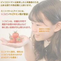 ピッコロトマト3Kg(愛知県産ミニトマト)【送料無料】食味にこだわる生産者より産地直送!