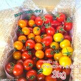 ミニトマト ピッコロトマトミックス3kg(愛知県産 ミニトマト)【送料無料】ピッコロトマトが3種入り、生産者より産地直送!美味しいトマト ミックストマト  プチトマト