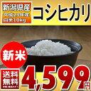 ((新米)) コシヒカリ 5kg×2袋 白米 10kg (新潟県) 29年産 【送料無料】【通常発送】