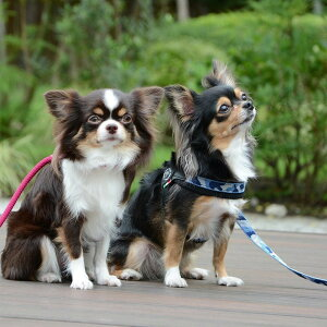 【メール便対応】FibbiaPENNYCOLLECTION/TREPONTILTP117【サイズ:3号】トレポンティイタリア製ペットペット用品犬用品小型犬中型犬ハーネス胴輪